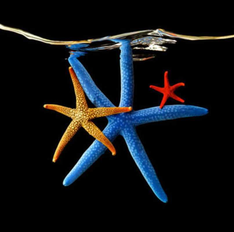 Tres coloridas estrellas marinas flotan en el agua y 'posan' para Mark Laita