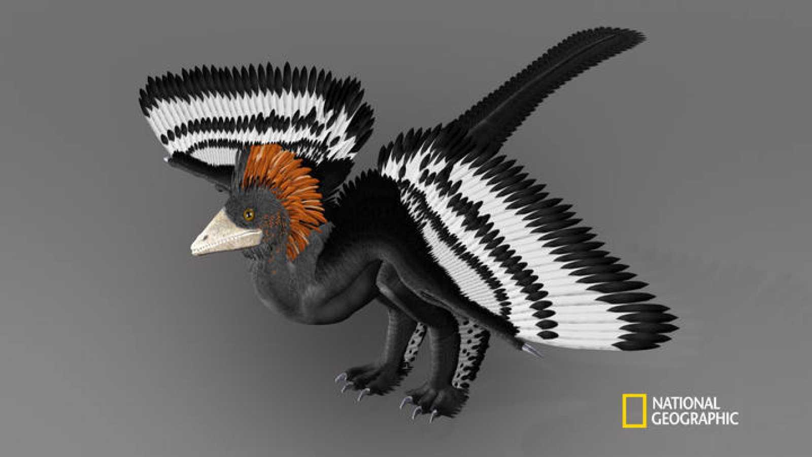 Ilustración del Anchiornis huxleyi y sus plumajes de colores.