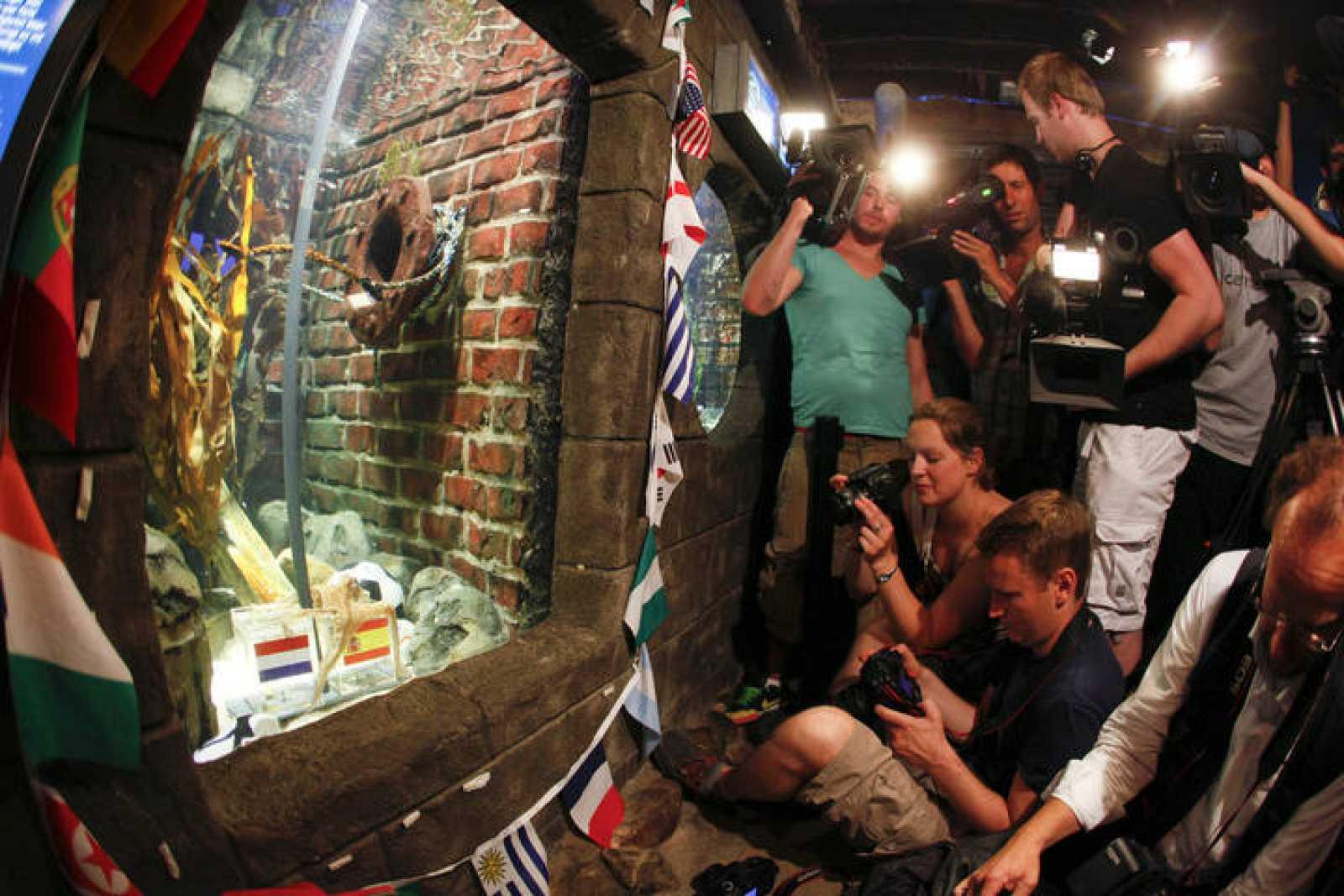 Los medios de comunicación, agolpados junto a la ventana del acuario del pulpo Paul.