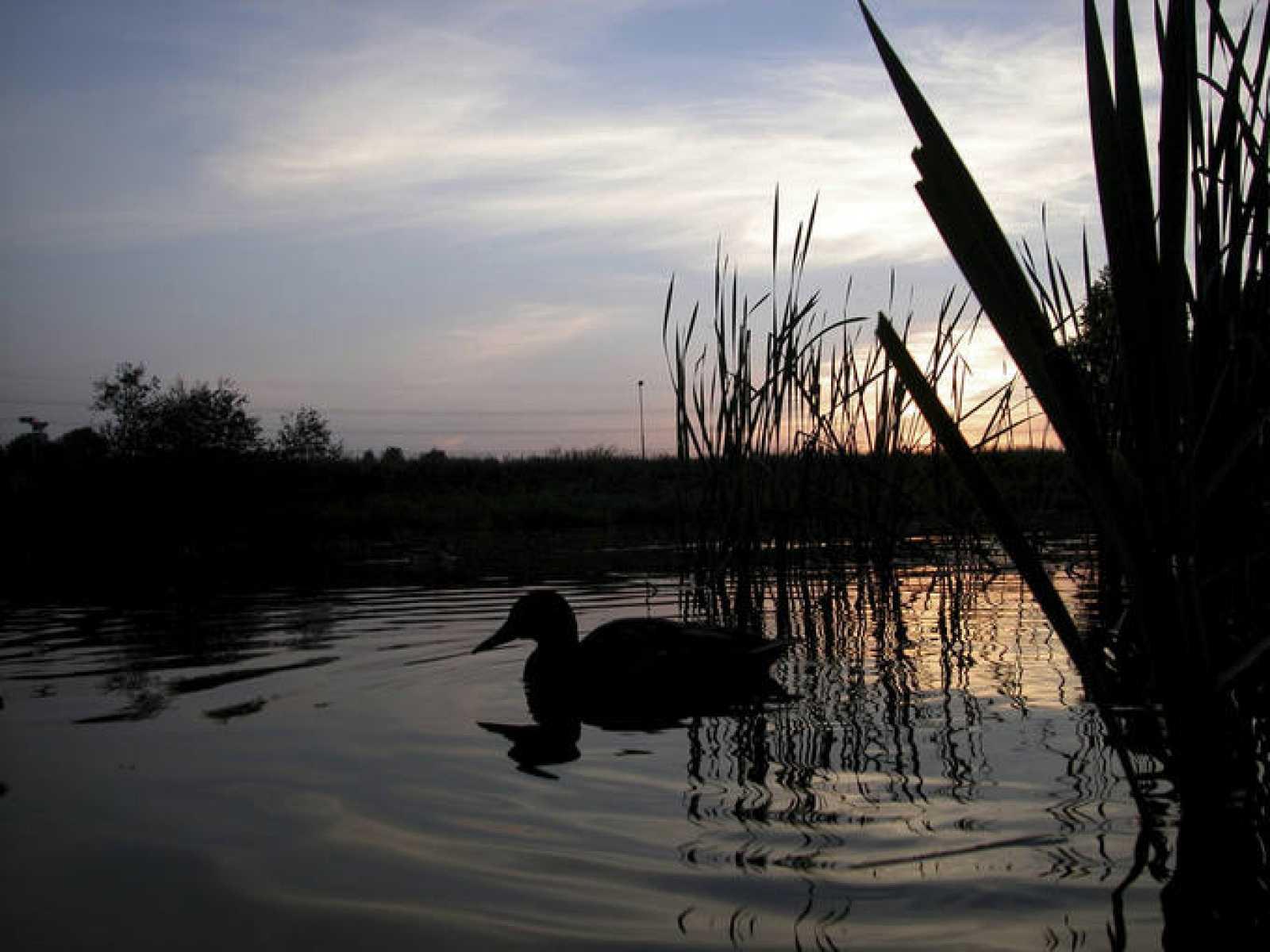 Los ecosistemas acuáticos españoles se han degradado en gran medida durante los últimos 50 años
