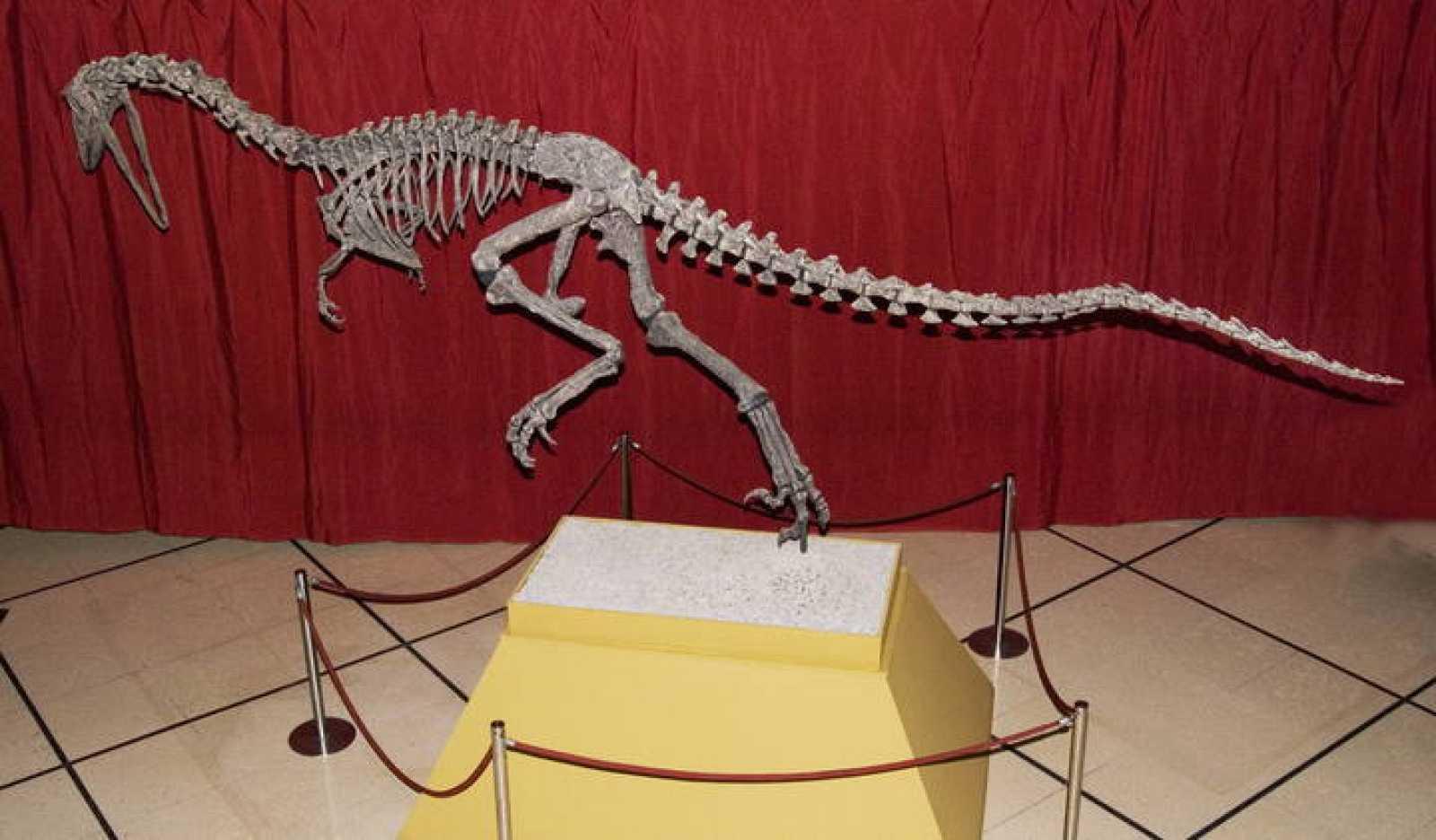 Reconstrucción del Austroraptor, una especie de dinosaurio que vivió en la zona de la Patagonia