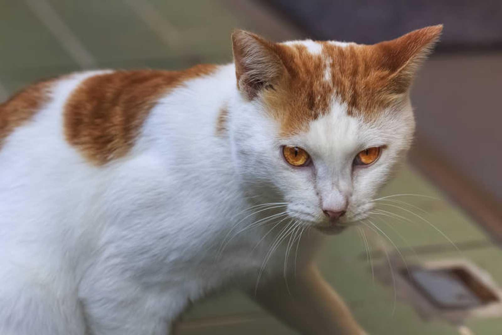 Los gatos asilvestrados han acabado con al menos 33 especies de ...