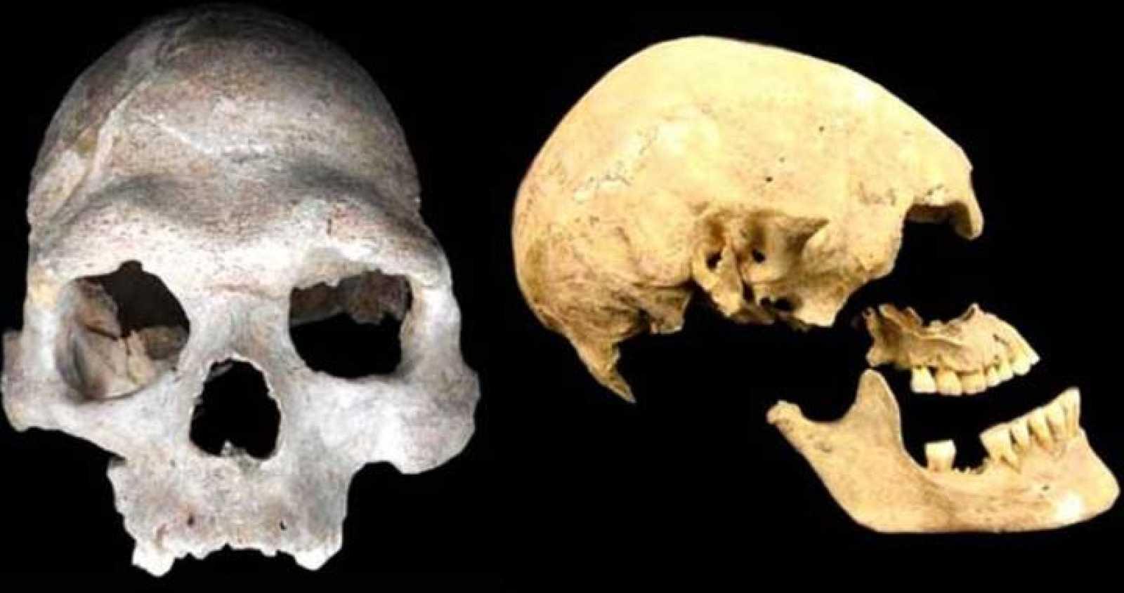 Cráneo de uno de los primeros agricultores (izquierda) y de un cazador-recolector del refugio de Loschbour, Luxemburgo (derecha).
