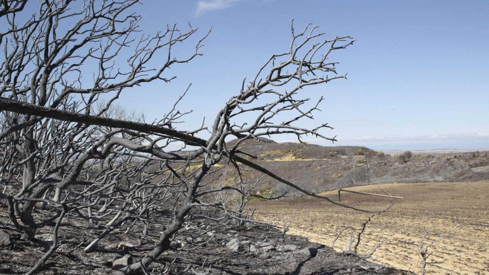 Vista de las zonas afectadas por el incendio declarado en la comarca de las Cinco Villas, en el término de Luna (Zaragoza).