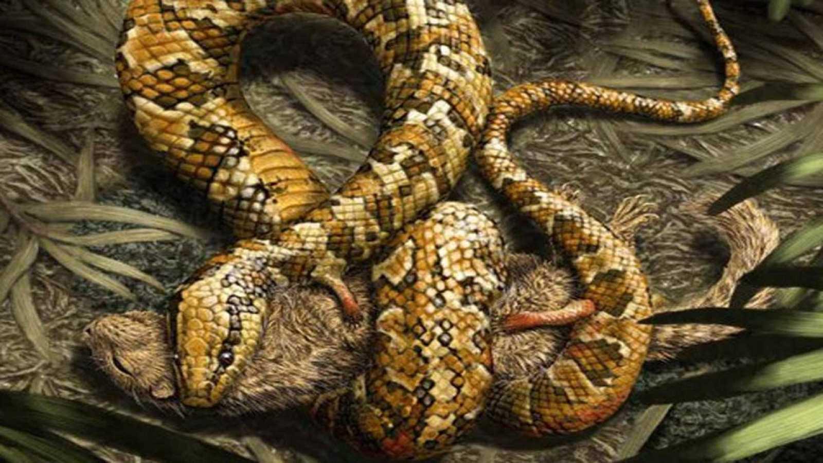 lustración de 'Tetrapodophis amplectus', la serpiente de cuatro patas