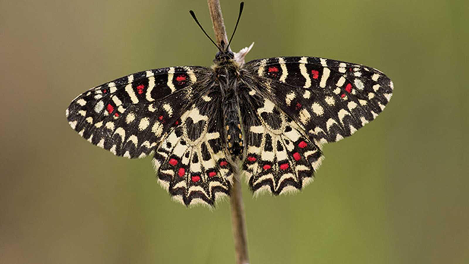 Hasta un 28% de las especies podrían estar sin descubrir