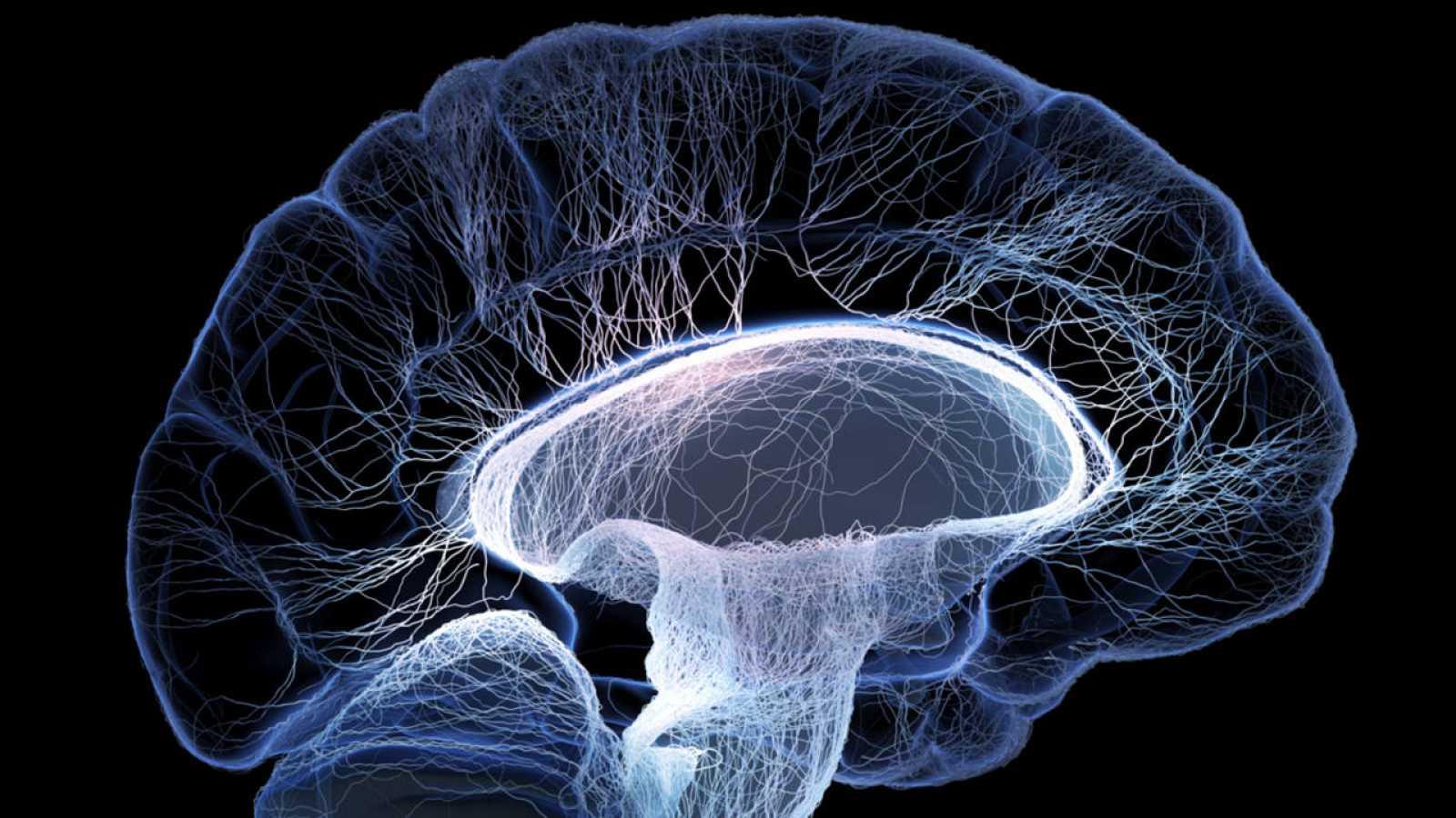 El cerebro olvida de manera intencionada, aunque sea temporalmente, para ahorrar energía.