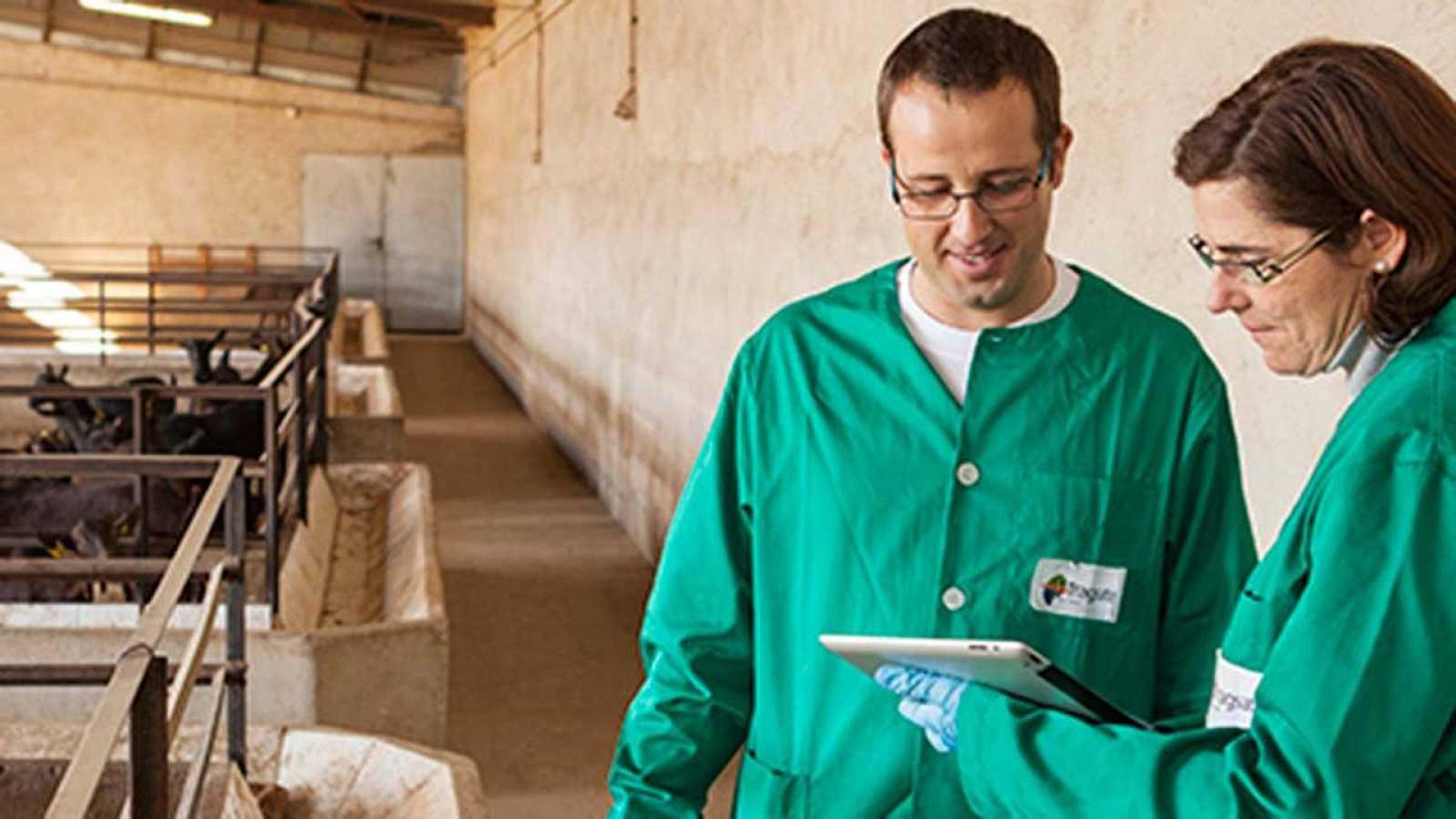 Dos veterinarios de Tragsa revisan los datos de una explotación ganadera
