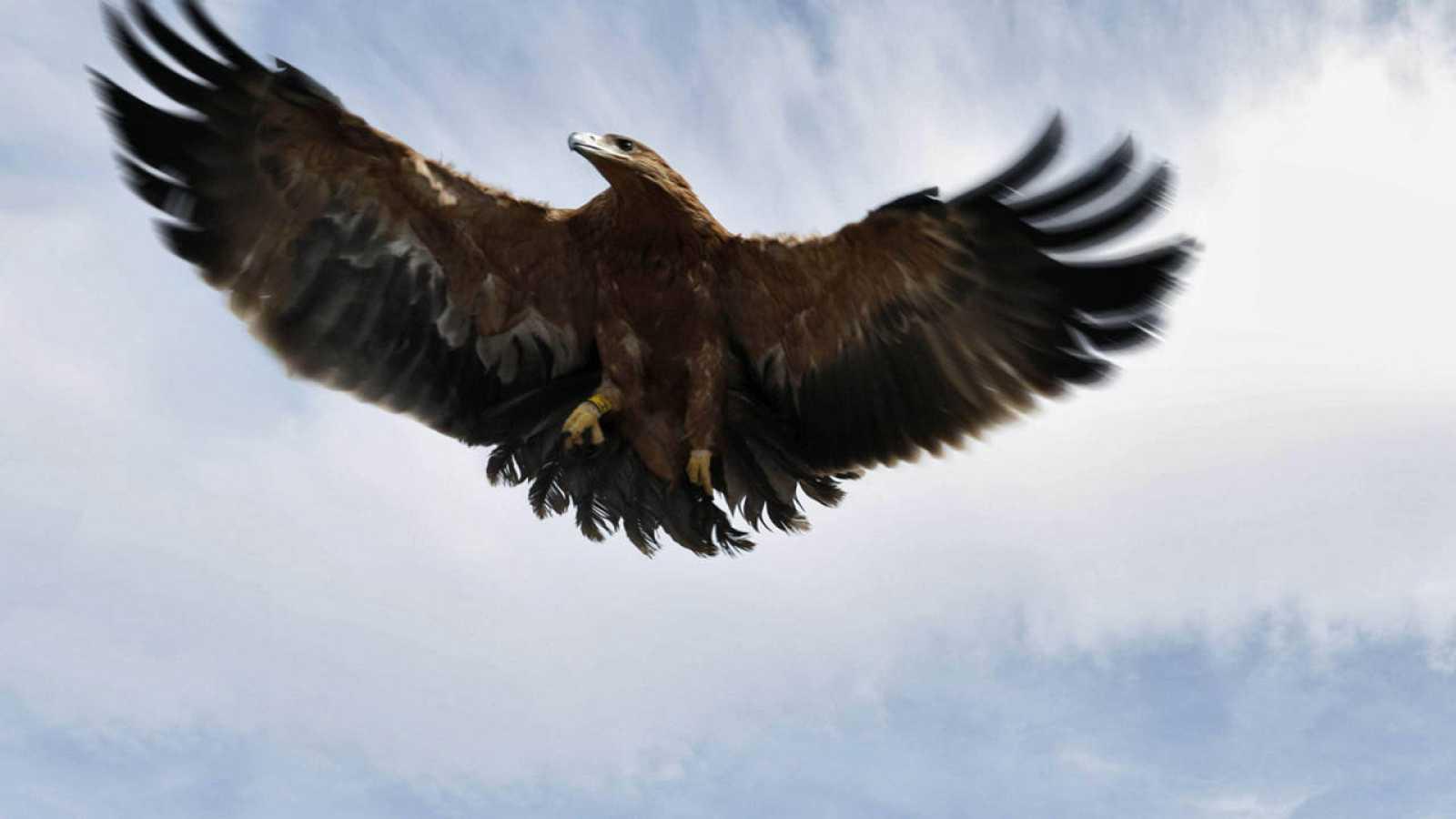 Las poblaciones de águila imperial y lince de Doñana vuelven a caer ...