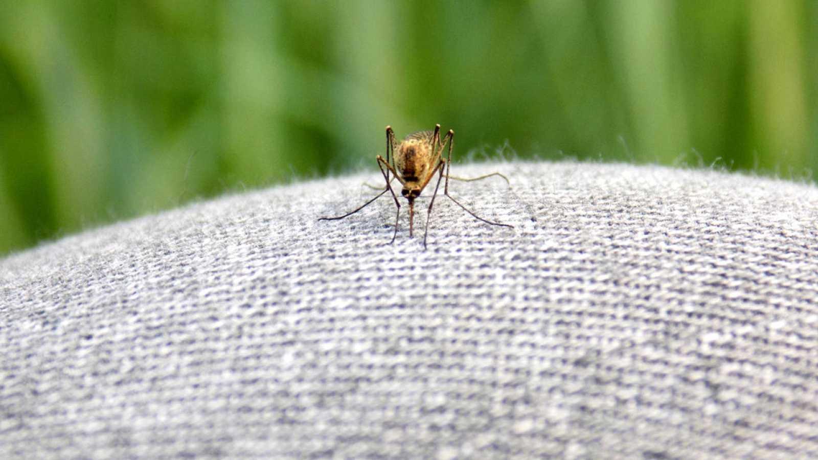 1fd03c76c Un mosquito sobre unos pantalones vaqueros