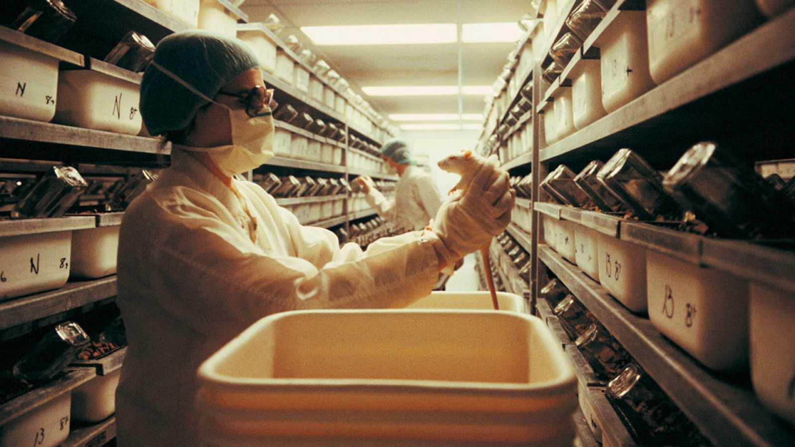 Para la medicina, el uso de animales en la fase de experimentación es muy importante en la obtención de nuevos medicamentos.