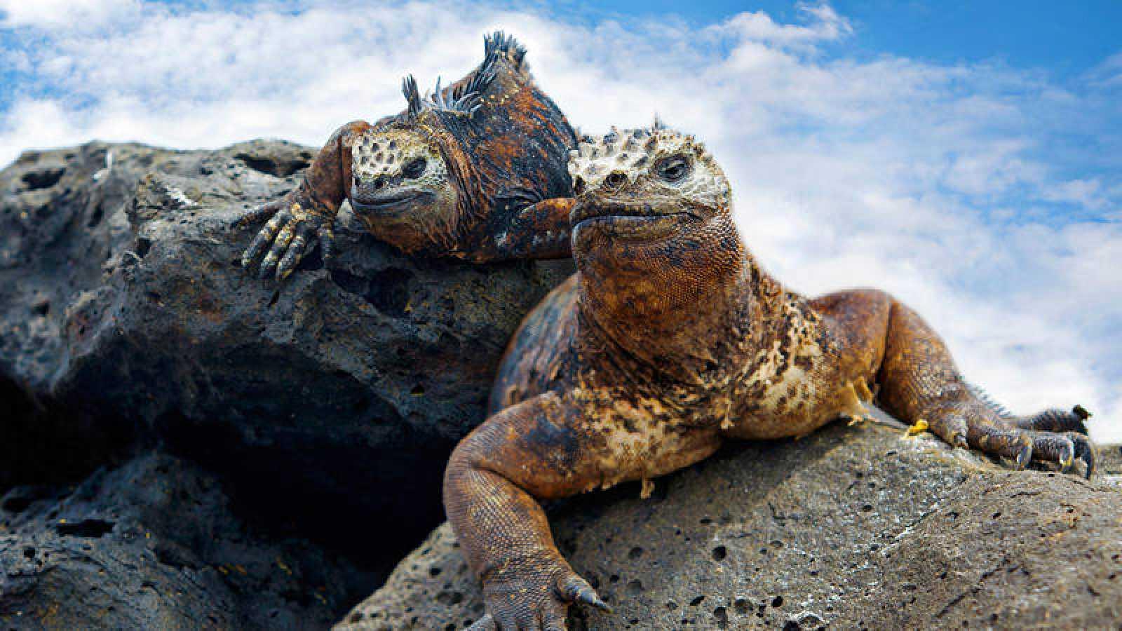 Las islas Galápagos representan uno de los lugares biológicamente más diversos del mundo.