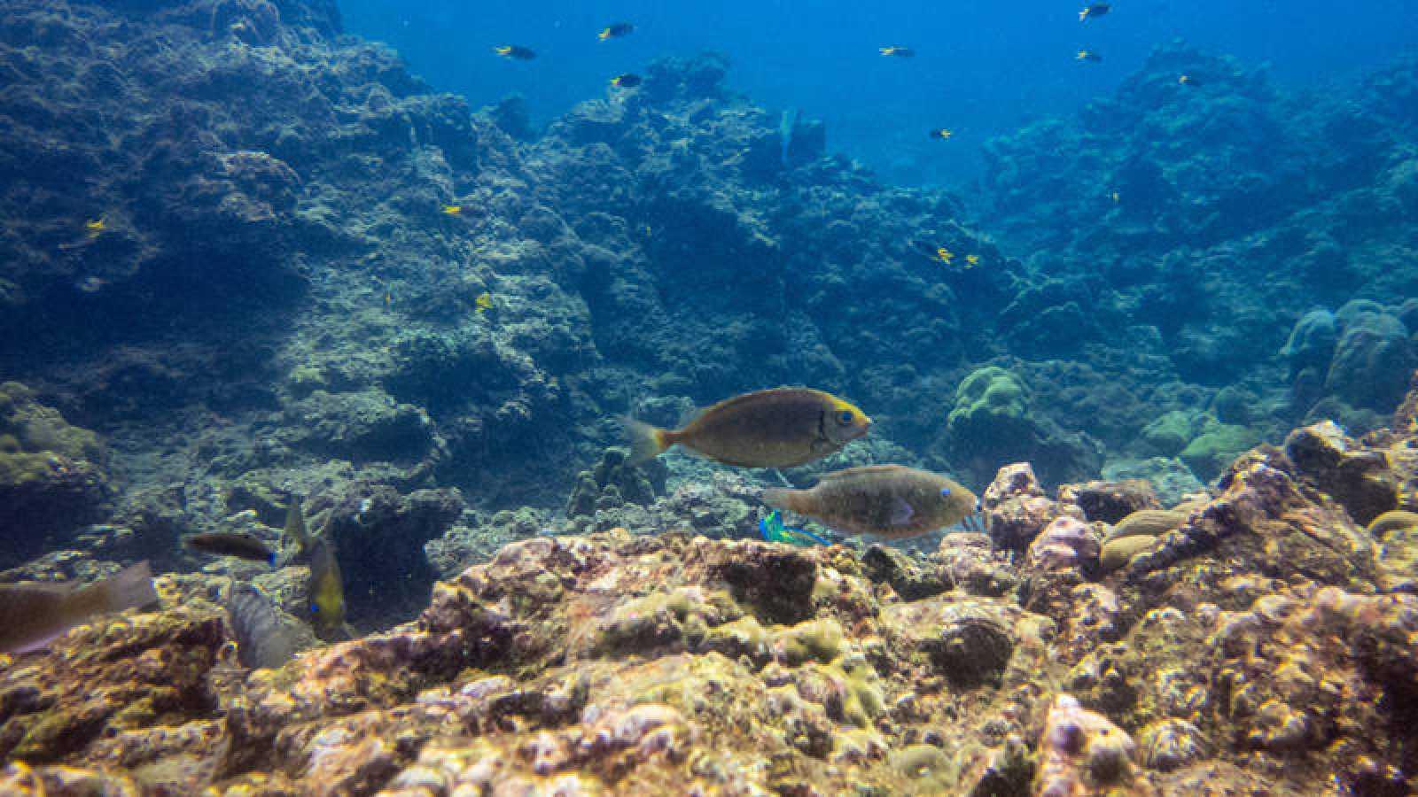 El arrecife japonés está considerado uno de los más antiguos y de mayor extensión del hemisferio norte.