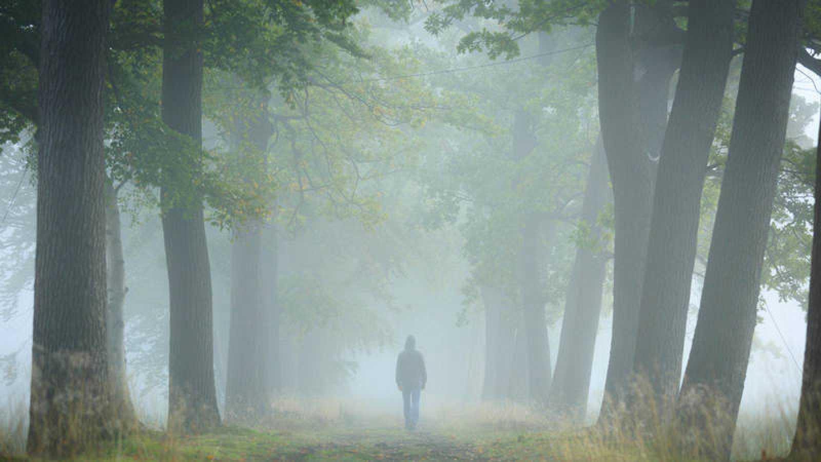 Los ambientes difusos, como la niebla, son aquellos en los que la luz no se propaga en línea recta.