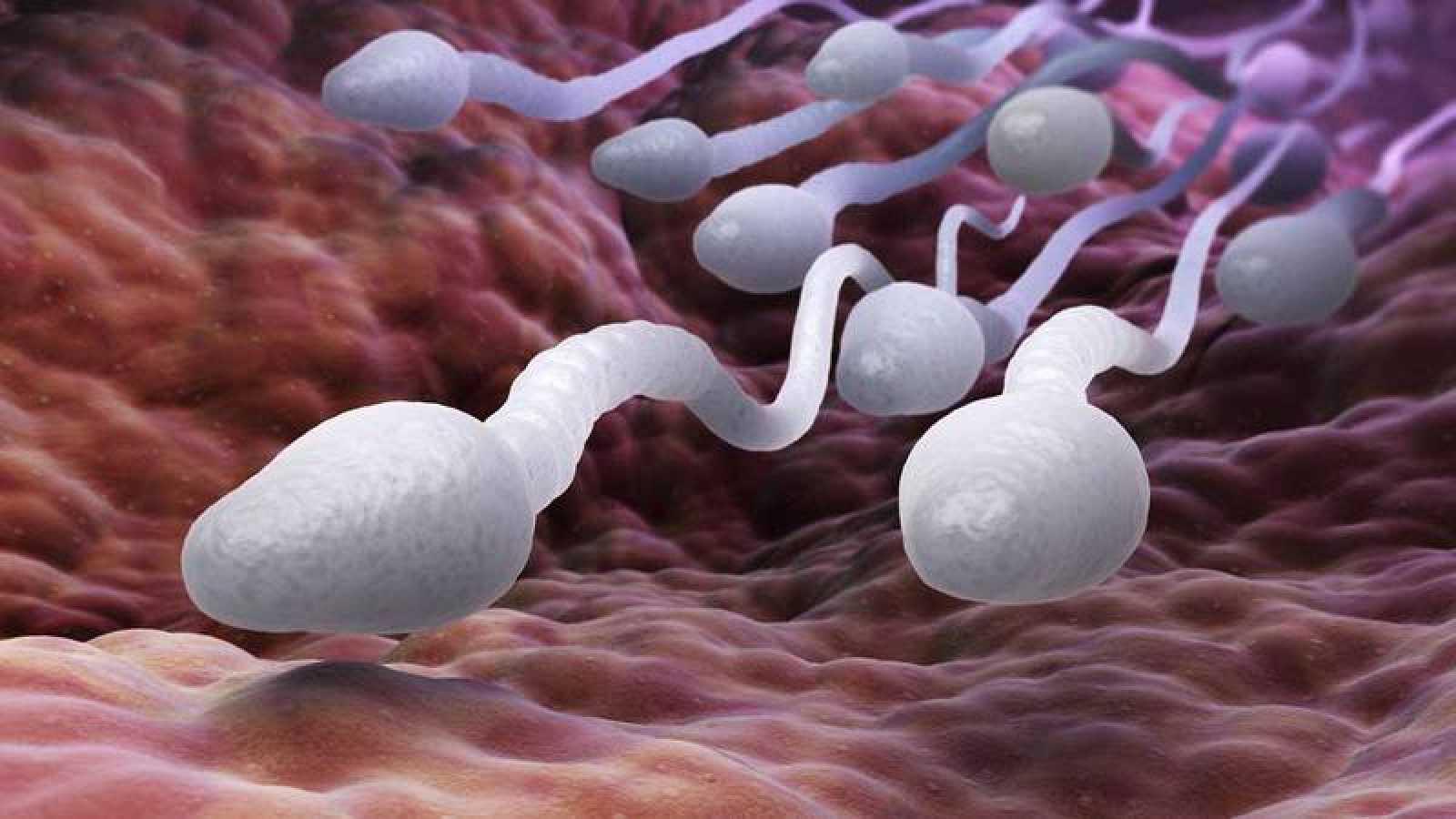 La infertilidad es un problema que afecta al 15% de las parejas en edad reproductiva.