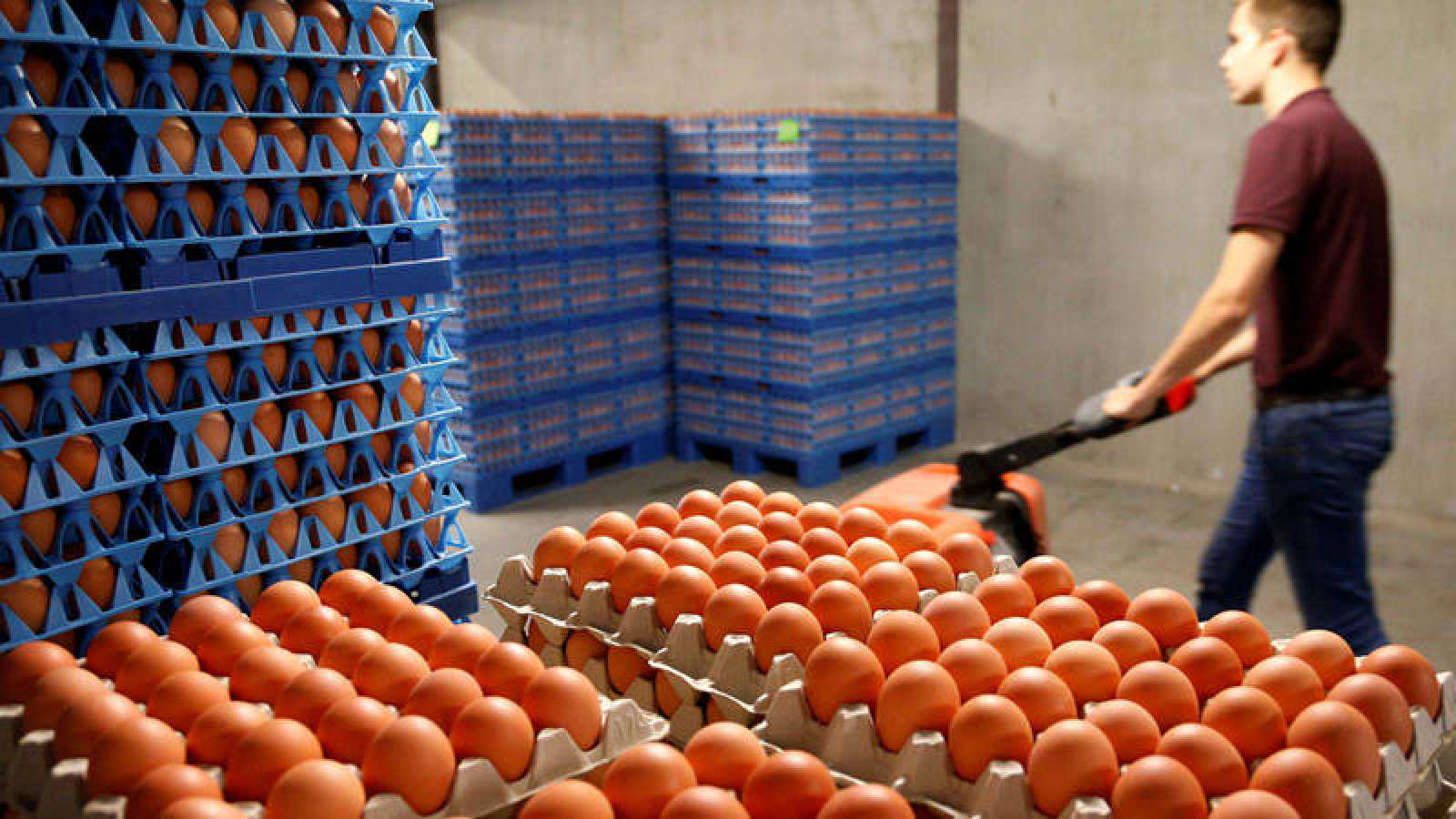 Huevos en una granja en Wotel, Bélgica.