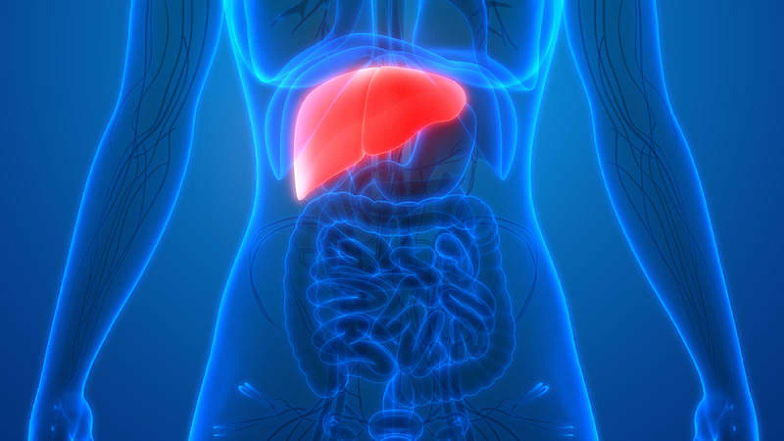 El cáncer de hígado es el más letal después de los del aparato respiratorio.