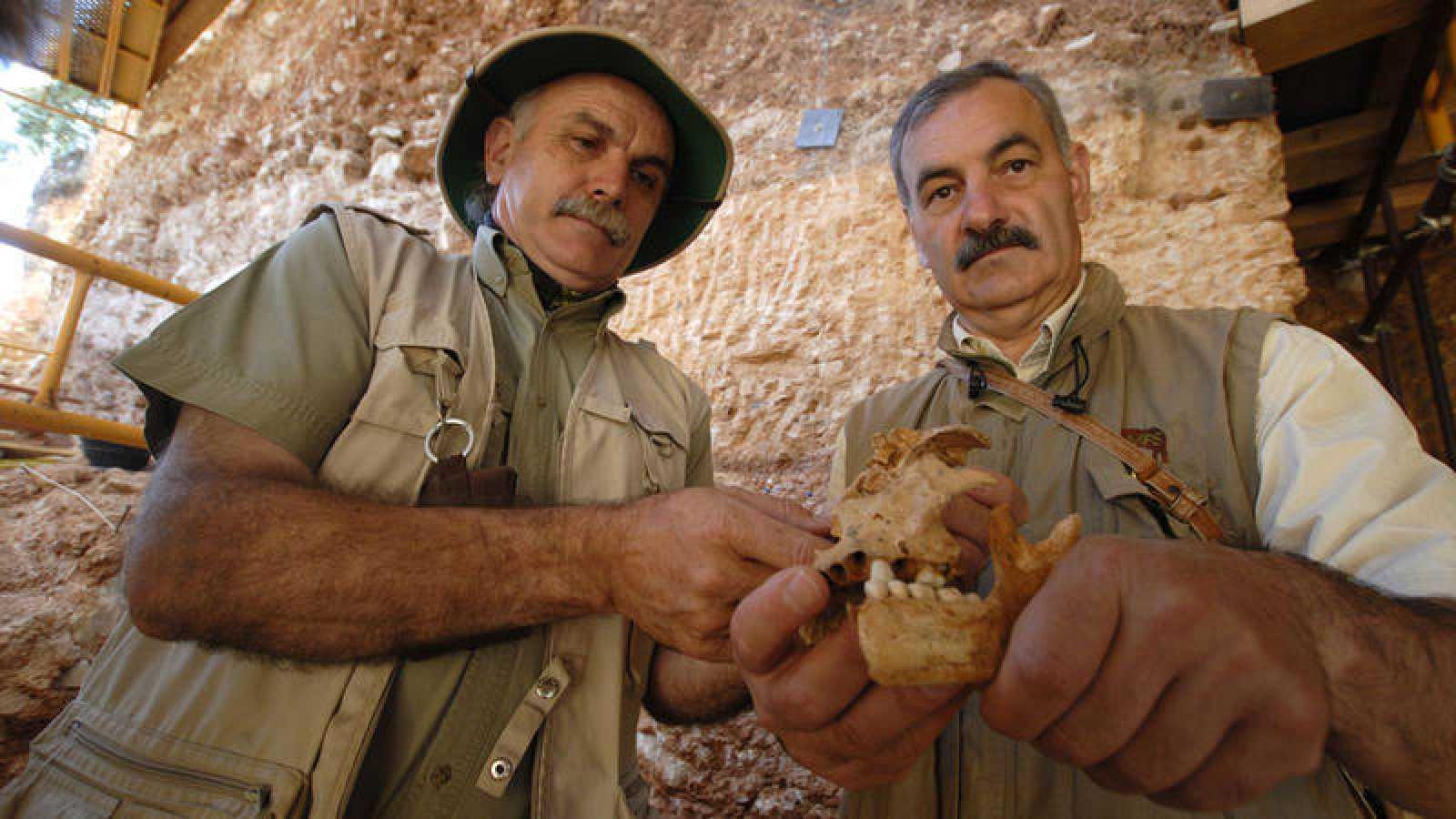 Foto de archivo de Eudald Carbonell (i) y José María Bermúdez de Castro con restos de Homo antecessor procedentes del nivel TD6 de Gran Dolina, en Atapuerca.
