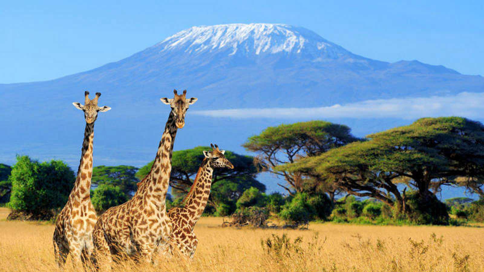 La población de jirafas de Kenia ha pasado de unos 45.000 individuos en 1998 a unos 28.850 en la actualidad.