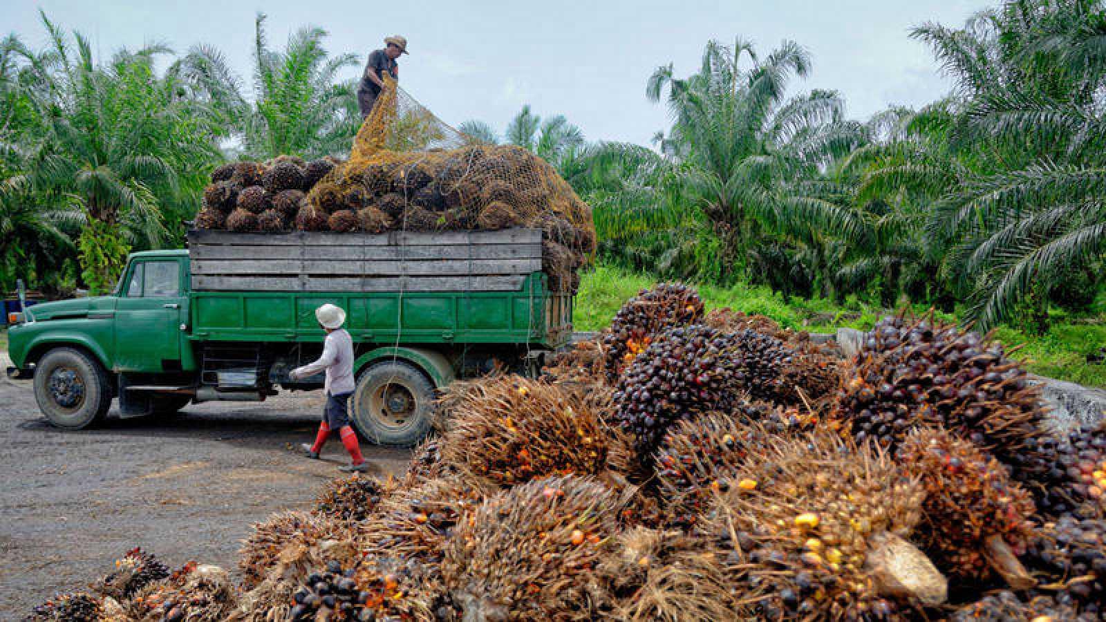 Casi el 90% de los españoles desconoce que el diésel contiene aceite de palma