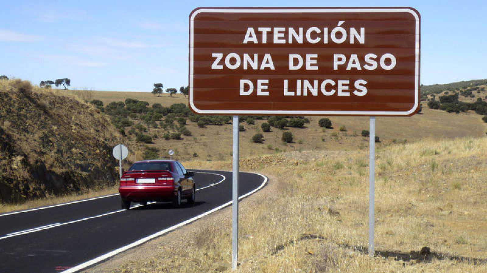 Fotografía de archivo que muestra un cartel en la carretera CRP 5042, en Ciudad Real, que advierte del paso de linces ibéricos en esta vía de comunicación.