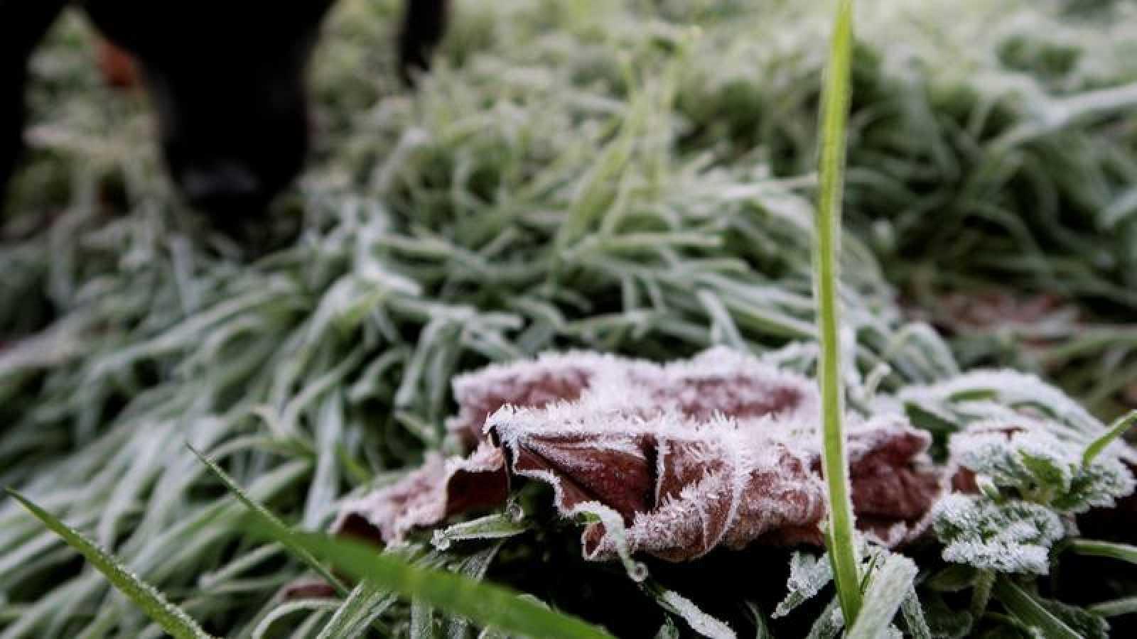 Un perro olfatea en la hierba helada en un parque de San Sebastián