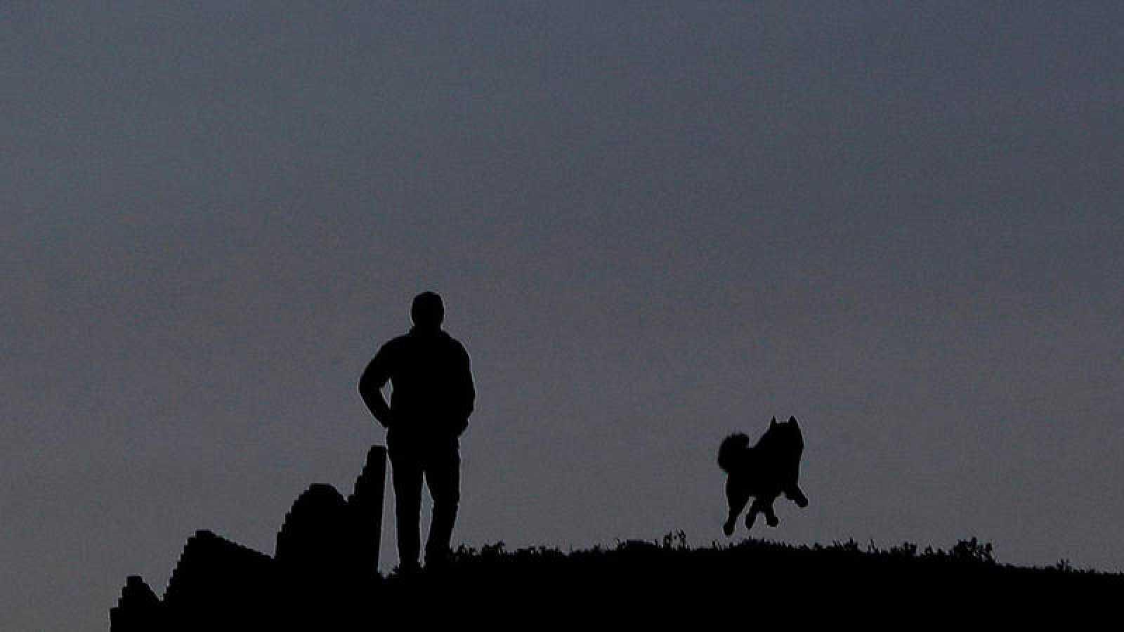 Los perros fueron los primeros animales domesticados de la historia, a partir de lobos.