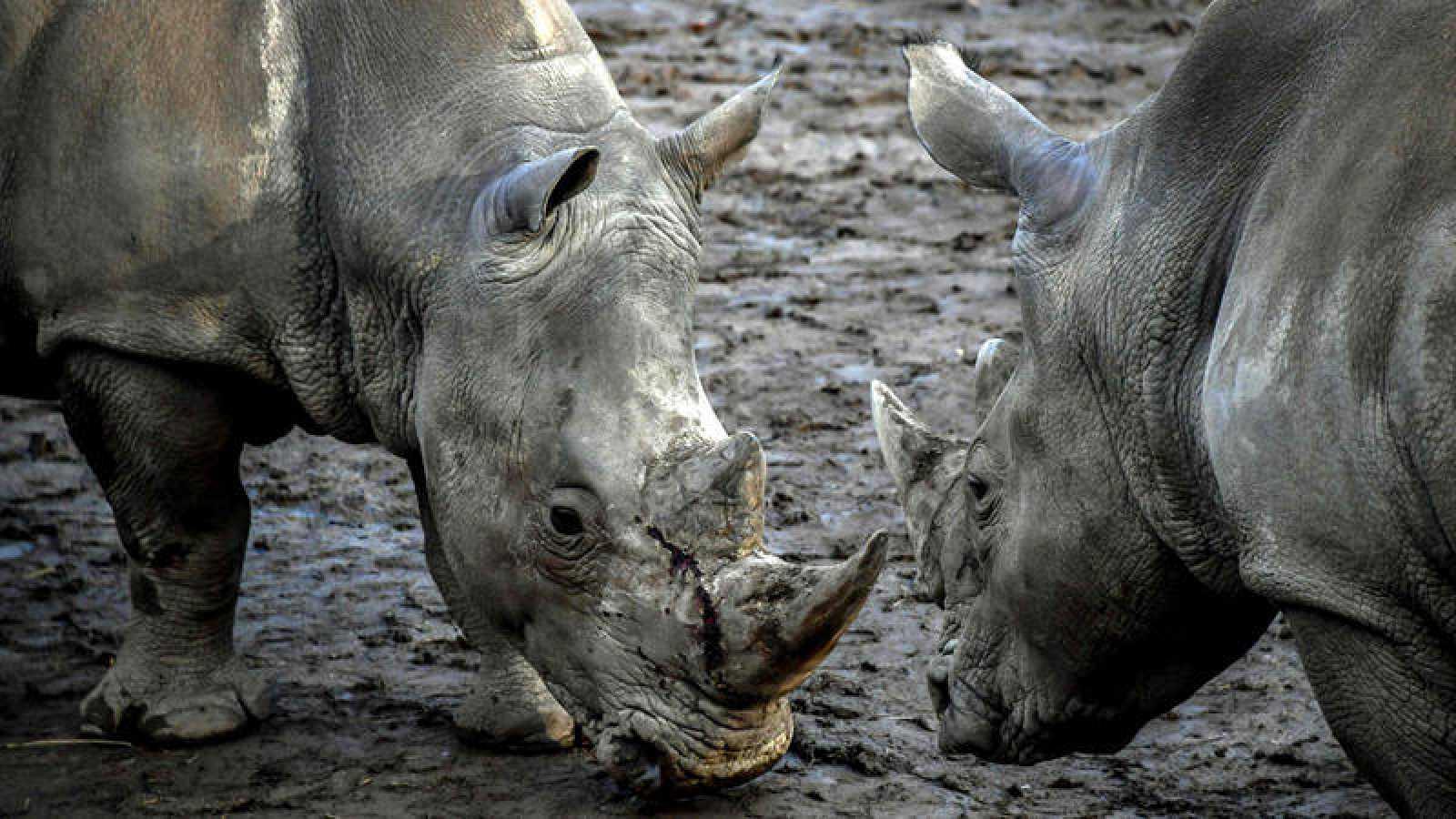 El Parque Kruger fue una vez más el espacio más castigado, con 421 animales asesinados a manos de los furtivos.