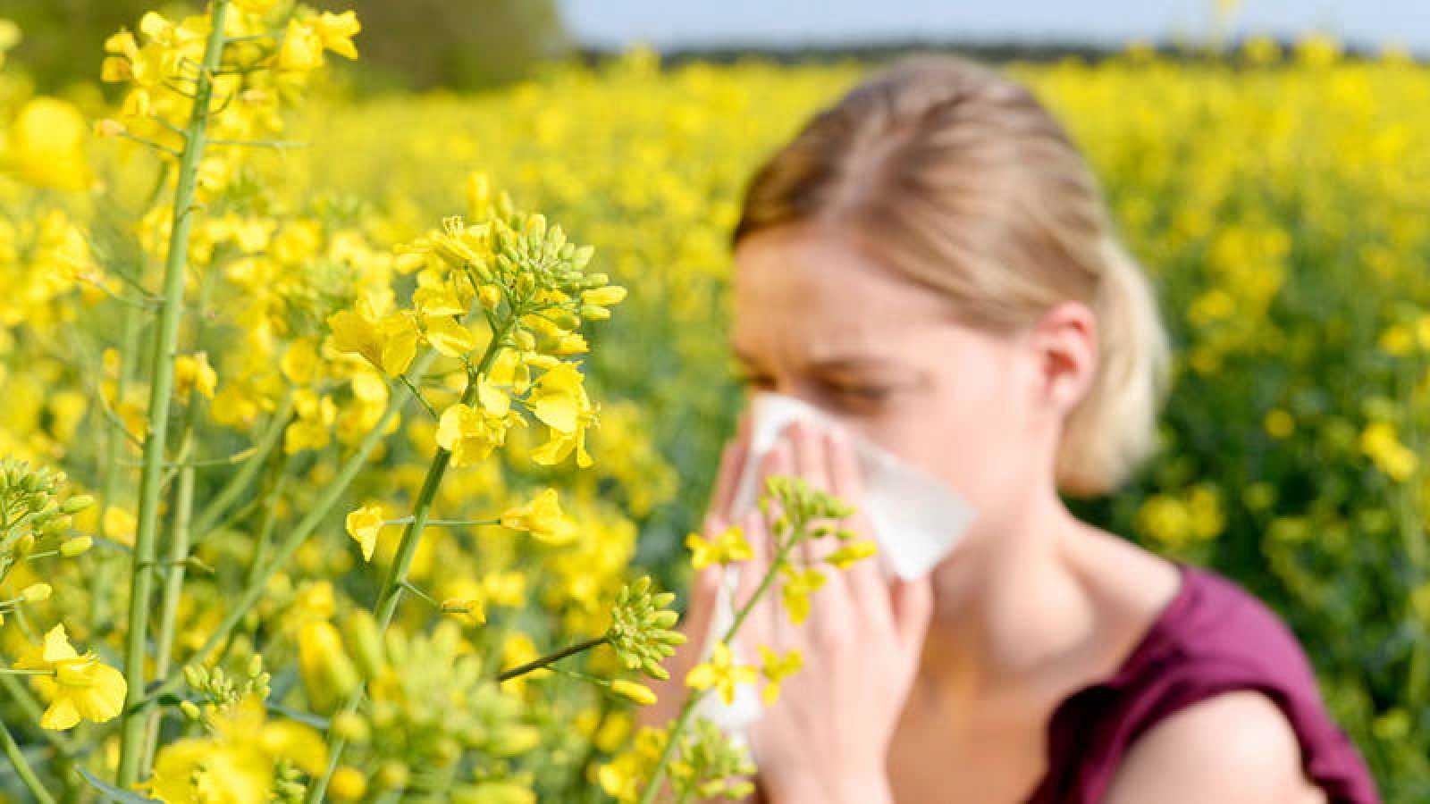 En España, siete millones de personas tienen alergia a las gramíneas.