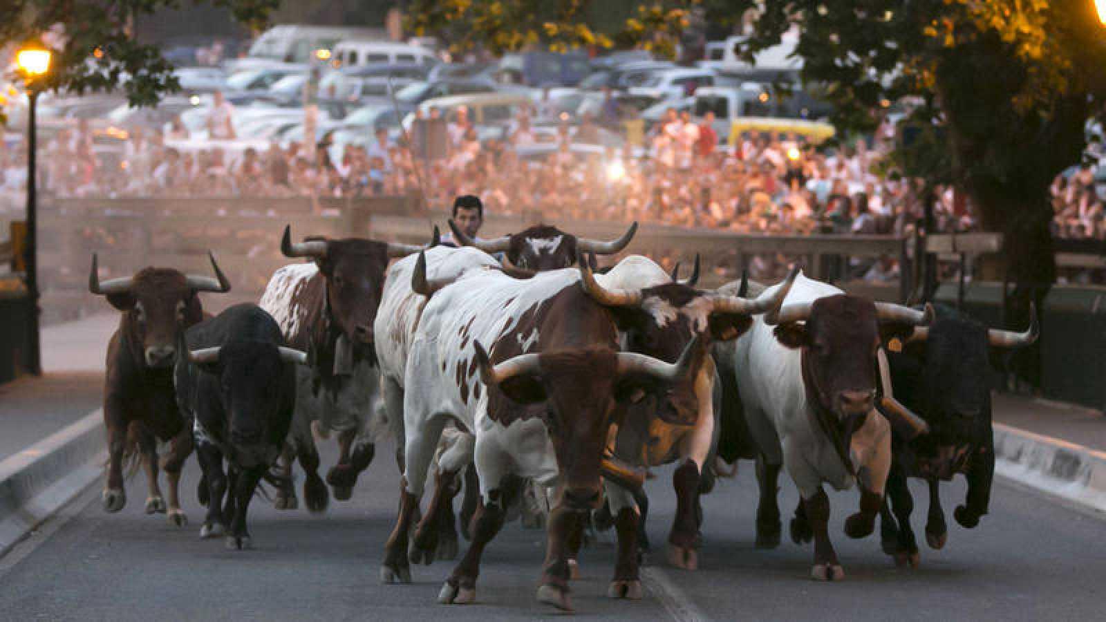 Imagen de los encierrillos que se celebran el día antes del encierro de Sanfermines