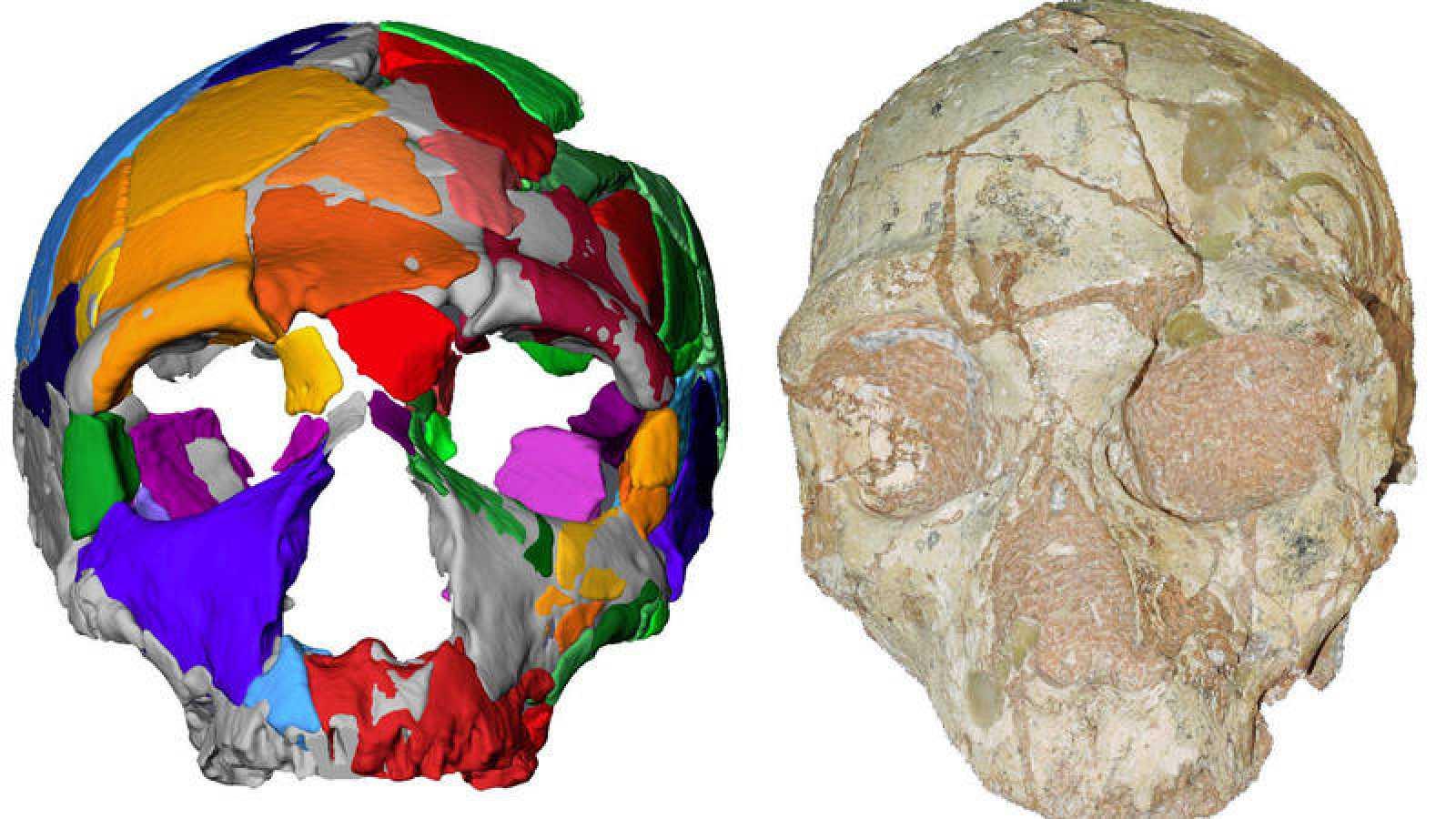 Un segundo cráneo, encontrado también en Grecia, dataría de hace 170.000 años y cuenta con rasgos de neanderthal.