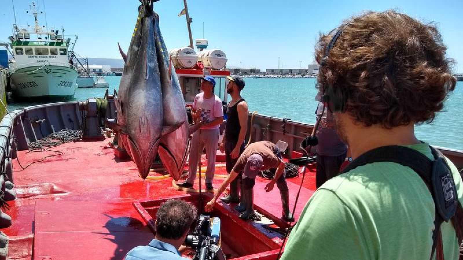 Comienza la temporada en las almadrabas de Cádiz