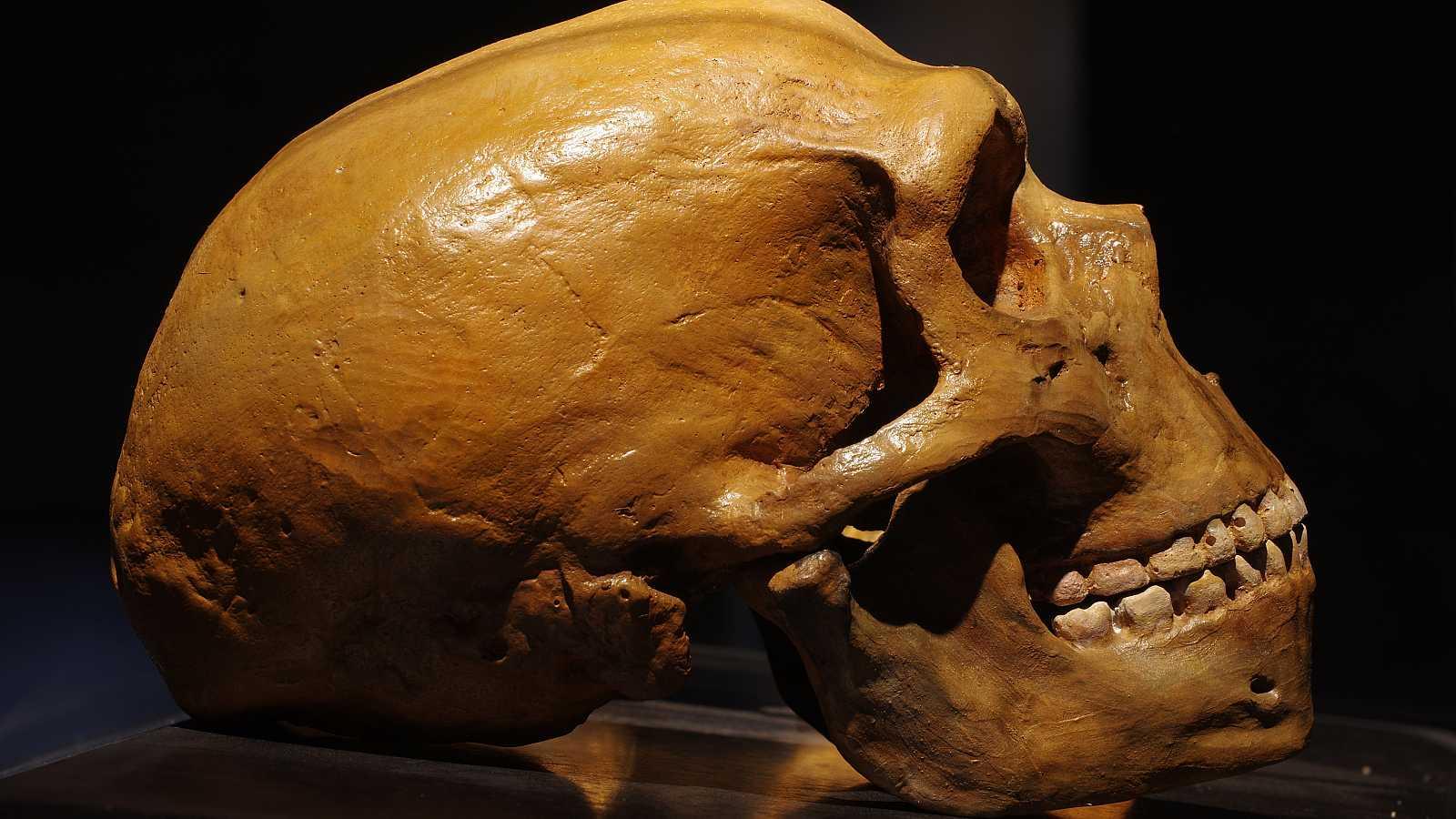 Cráneo neandertal.