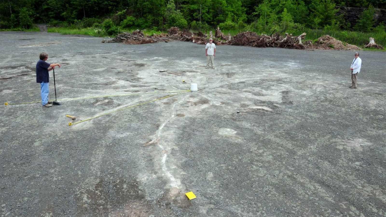 Imagen de la cantera donde se han encontrado los restos botánicos fósiles.