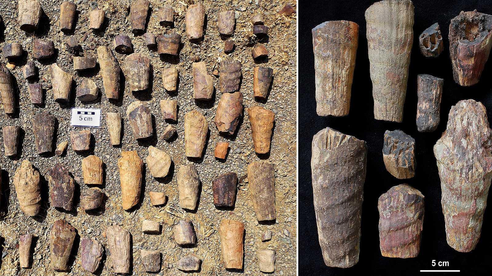 """Un equipo de científicos descubre un """"raro fósil marino"""" de hace 465 millones de años en Cabañeros"""