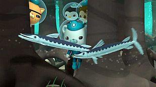 VideoThe barracudas