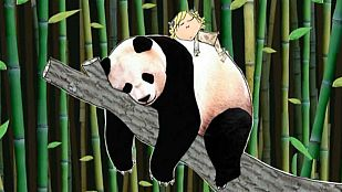 VideoVoy a salvar un panda