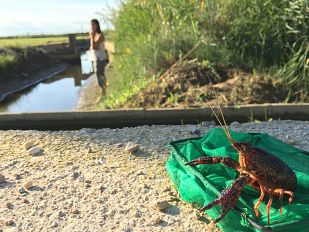 Video¡Qué animal! recorre el Delta del Ebro