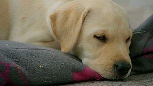 VideoEl maravilloso mundo de los cachorros, cap. 9