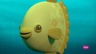 VideoThe sunfish