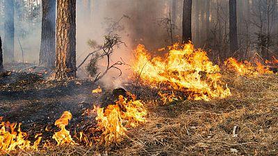 Cómo evitar incendios forestales