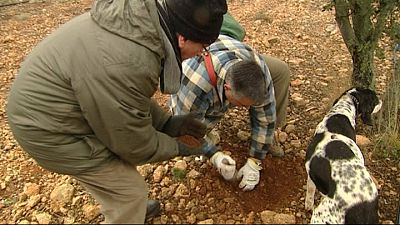 Joaquín Doñate nos muestra cómo se cazan las trufas