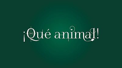 Logotipo ¡Qué animal!