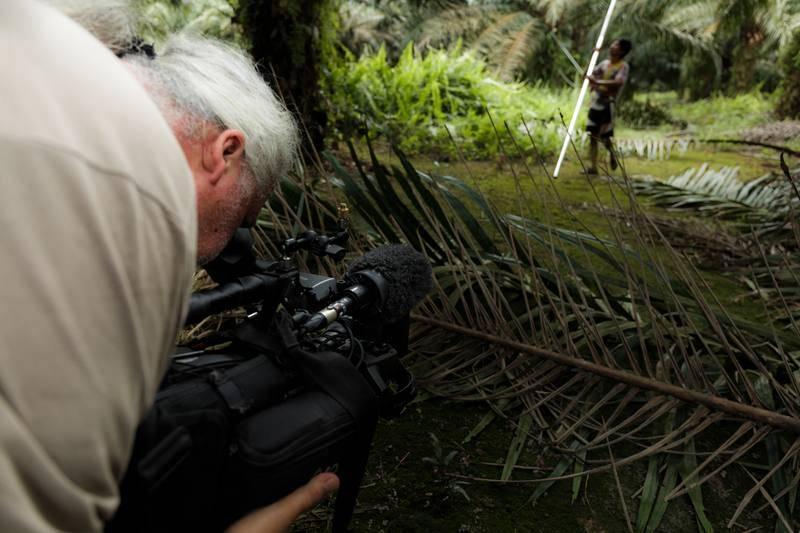 Rodaje en una plantación de palma aceitera