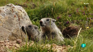 La 2 Noticias - La marmota infiel