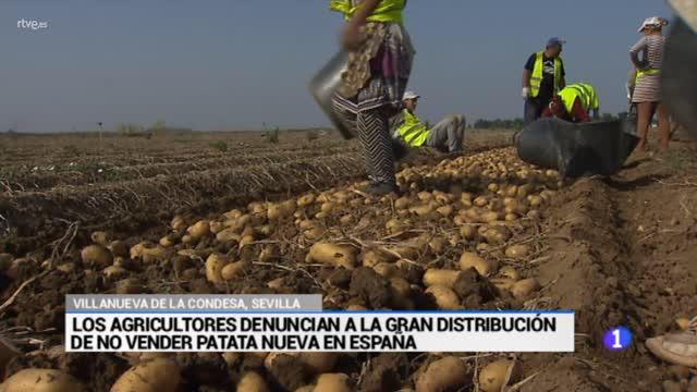 35 millones de pérdidas en el campo sevillano por la patata vieja francesa