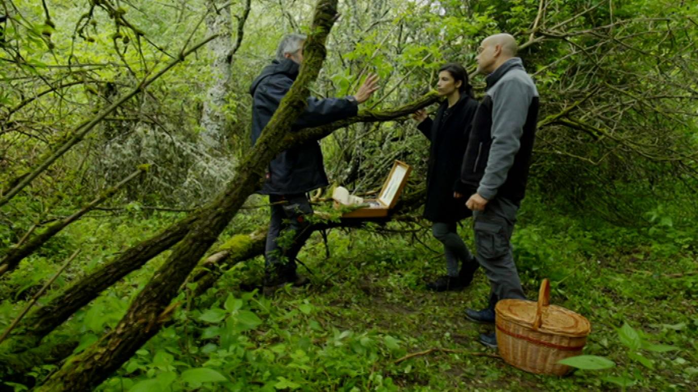 El señor de los bosques - La Acebeda