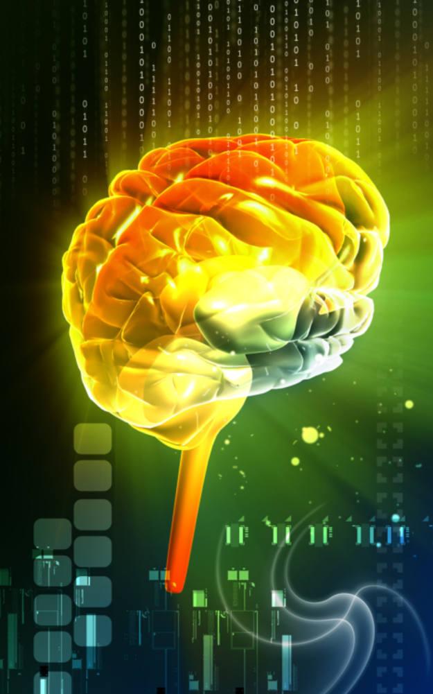 La amígdala cerebral es la zona del cerebro que reacciona ante las injusticias