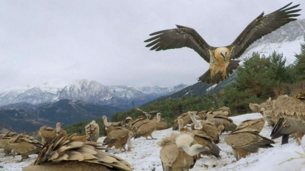 Aquí ñla tierra - El apasionante Parque Nacional de Ordesa y Monte Perdido