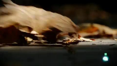 El escarabajo verde - El apocalipsis de los insectos